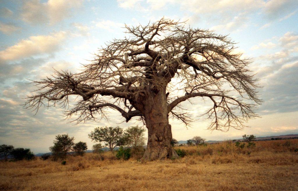 itinerari viaggio in africa